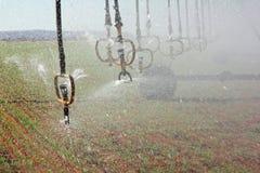sprinklersvatten arkivbild