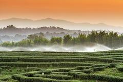 Sprinkles at tea plantation of Rai Boon Rawd Stock Photos