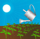 Sprinkling can waters plant solar daytime Royalty Free Stock Images