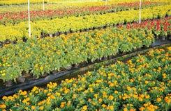 Sprinkling irregation nursery garden Stock Photos