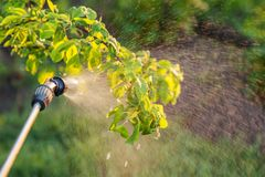 Spraying trees with pesticides Royalty Free Stock Images
