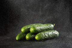 Sprinkling water over five green fresh small cucumbers gherkins on a black background with waterdrops Stock Images