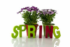 Sprint with fresh flowers Royalty Free Stock Photos