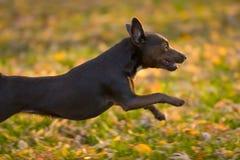 sprint jesienią zdjęcie stock