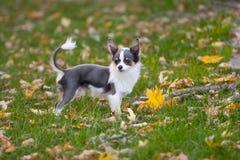 sprint jesienią obrazy stock