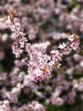 Sprint kwiaty Zdjęcia Stock