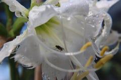 Sprint mide el tiempo de la lluvia Fotos de archivo