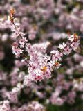 Sprinta blommor Arkivfoton