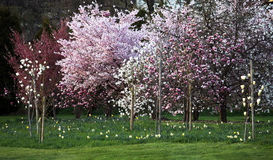 Sprintime blooming trees Royalty Free Stock Images