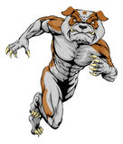 Sprinting Tough Bulldog Mascot Royalty Free Stock Photo