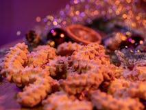 Spritz печенья рождества печениь на украшенной таблице стоковое изображение