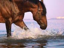 Spritzen des Pferds Stockfoto