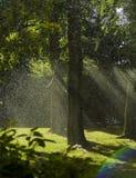 Spritzt und Regenbogen Stockfoto