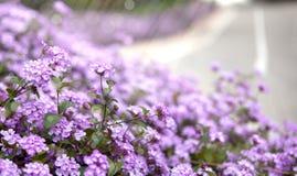 Sprng blommor royaltyfria foton