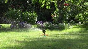 Sproeier het water geven de straal van het waterdalingen van de hulpmiddelnevel op tuingazon en bloemen 4K stock video