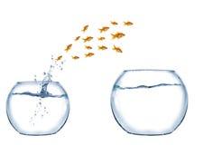 Sprong van ondiepte van vissen Royalty-vrije Stock Afbeelding