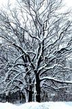 Sprookjesland VI van de winter stock afbeelding