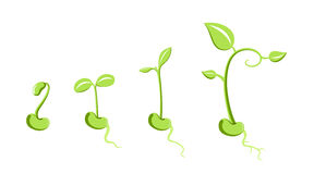 Sprout stock illustration
