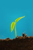 Sprout Stock Images