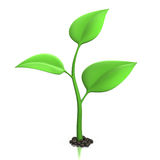 Sprout Stock Photography