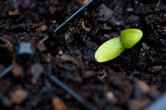 Sprout imagens de stock