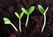 Sprout fotografia de stock