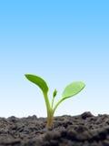 Sprout. fotos de stock