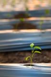 sprout Στοκ Φωτογραφία