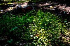 sprout Imagem de Stock