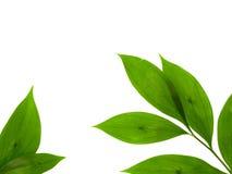 Sprout Foto de Stock