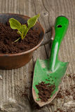 Sprout And Spade Stock Photos