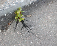 Sprout on asphalt Stock Photo