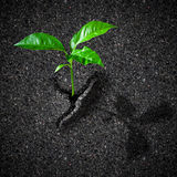 Sprout breaking asphalt concept Royalty Free Stock Photos