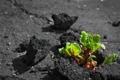 Sprout breaks through the asphalt stock photography