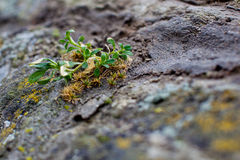 Sprout breaks through the stone Royalty Free Stock Images