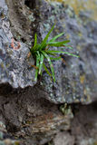 Sprout breaks through the stone Stock Photos