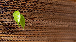 Sprout from a cardboard pile. New life concept or rising from repeated cardboard Stock Images