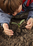 Sprout in children hand Stock Image