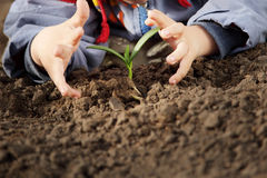 Sprout in children hand Royalty Free Stock Photos