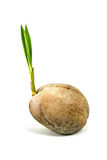 Sprout coconut Stock Photo