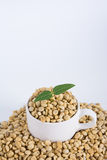 Sprout coffee tree with coffee beans Stock Images