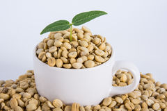 Sprout coffee tree with coffee beans Stock Photo