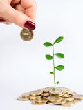 Sprout and coins Stock Images