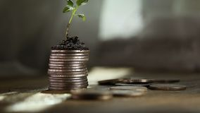 Sprout from coins . Money growth increase concept. Growing Money stock footage