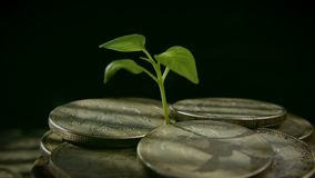 Sprout from coins. Money growth increase concept. Growing Money stock video footage