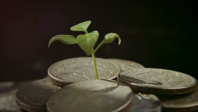 Sprout from coins. Money growth increase concept. Growing Money stock footage