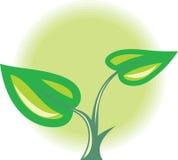 Sprout da planta verde Imagens de Stock