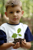 Sprout do carvalho da terra arrendada fotos de stock royalty free