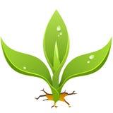 Sprout do vetor. Foto de Stock Royalty Free