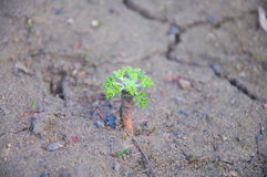Sprout in dry ground Royalty Free Stock Photos